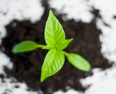CEA e progetti di educazione ambientale