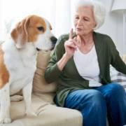 colf convivente pet sitter dog sitter
